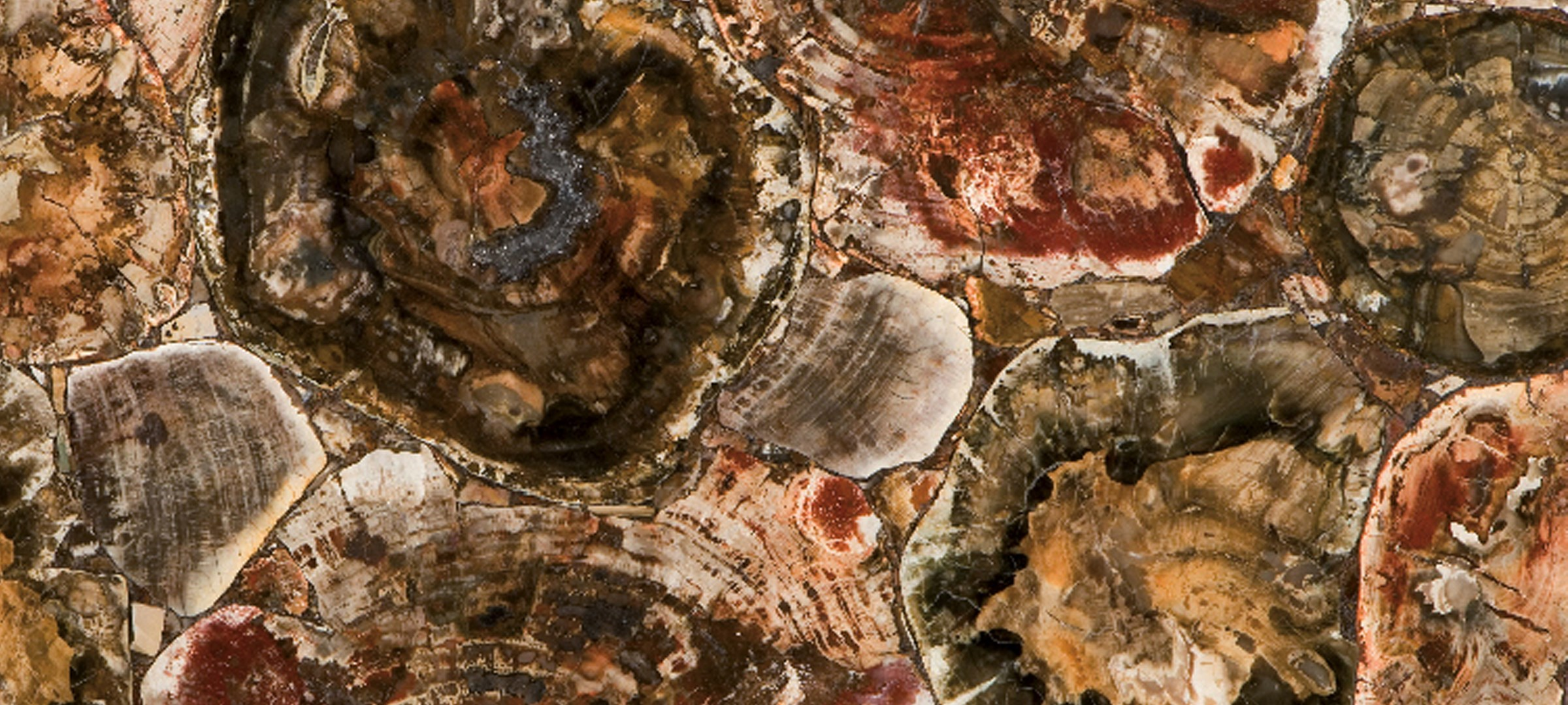 8330 Petrified Wood